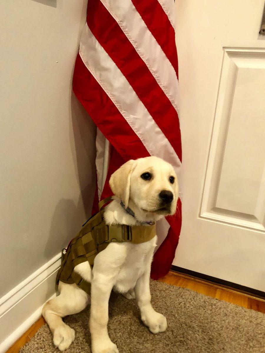 2017 Alpha Bravo Canine2